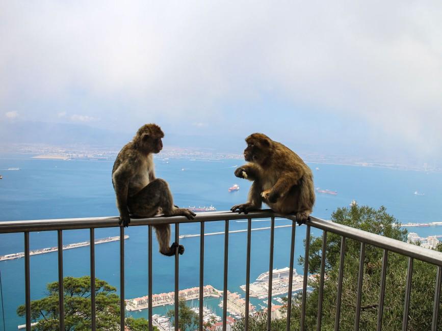Gibraltar-Apes-on-top.jpg